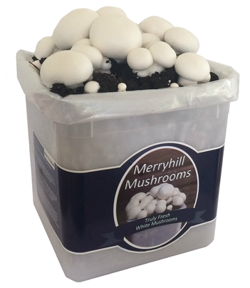 White Mushroom Grow Kit